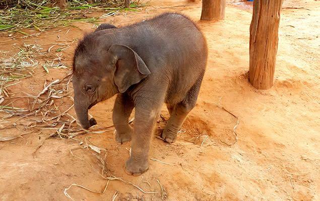 Wonderbaar Our Elephants   Green - Elephant Sanctuary Park Phuket BM-46