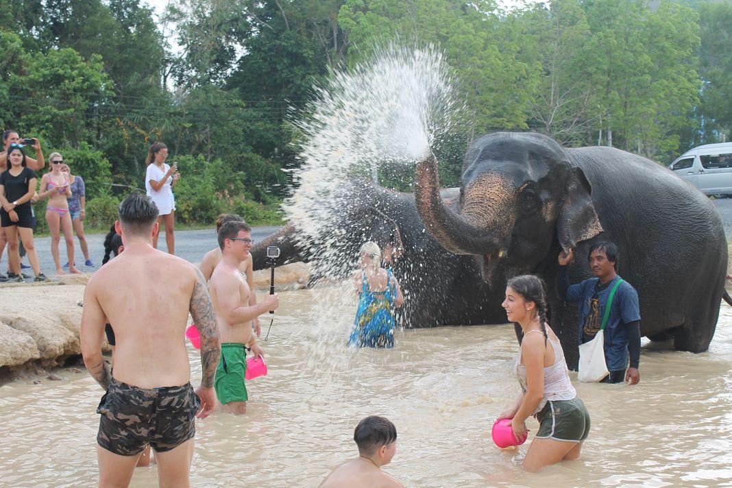 Fresh Water Pool   Green Elephant Sanctuary Park Phuket